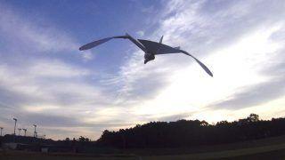 自作の羽ばたき機を飛ばしたらトンビが集まってきた
