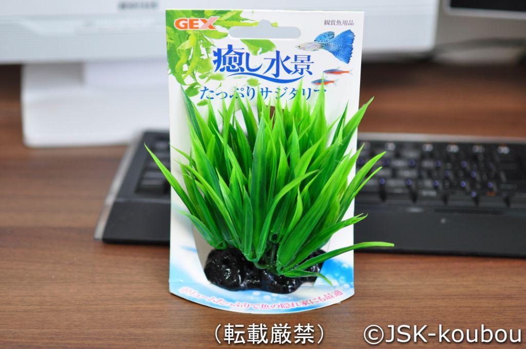 水草を購入